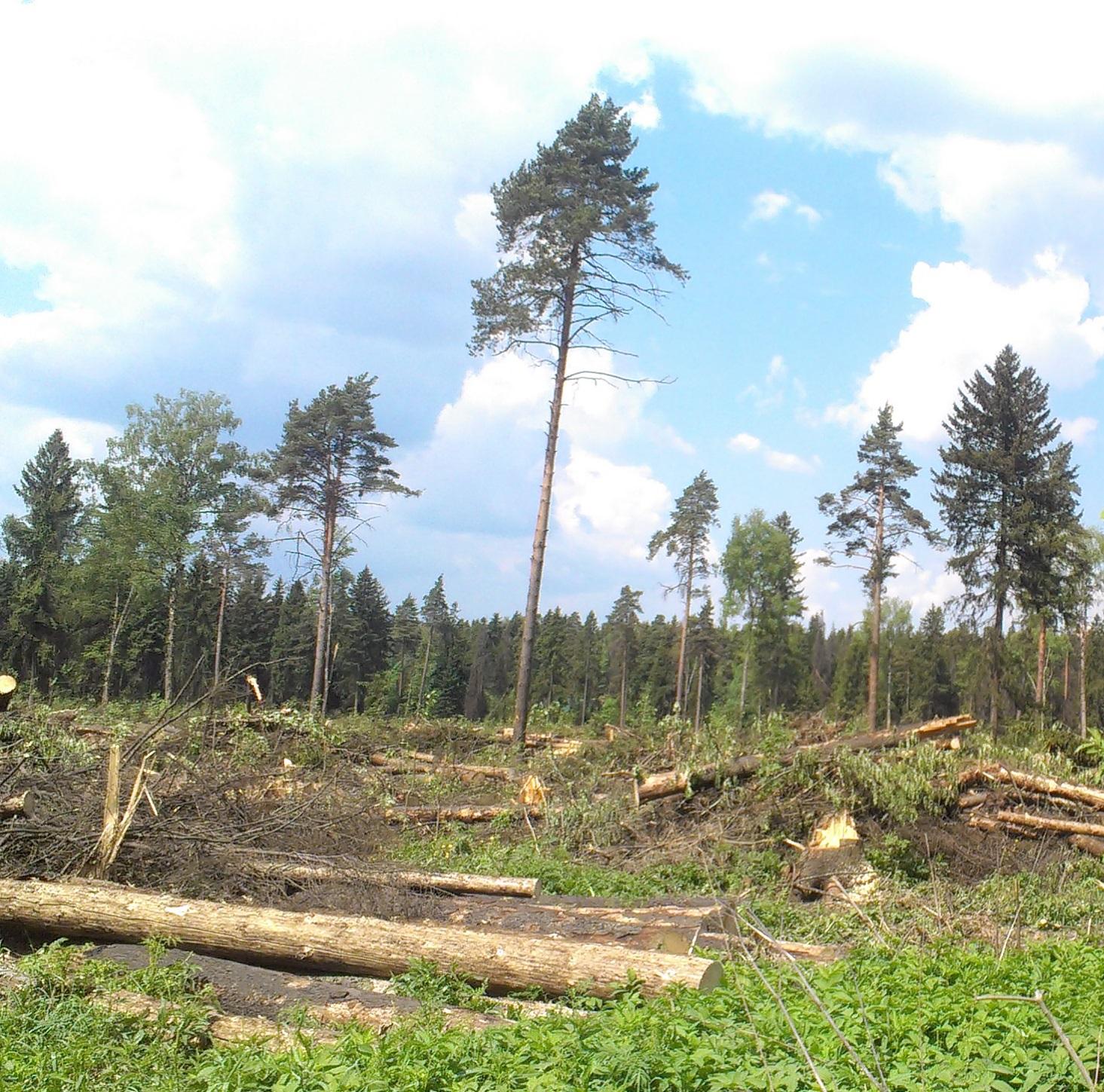 Депутатский запрос по массовой вырубке леса