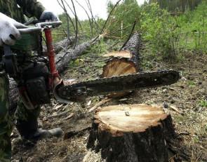 Финал с подвохом. От «лесной амнистии» лесам не поздоровится