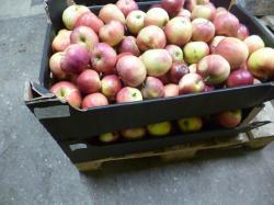 Уничтожено 30 килограммов польских яблок