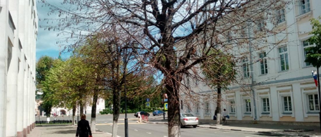 Итоги года экологии в Ярославле