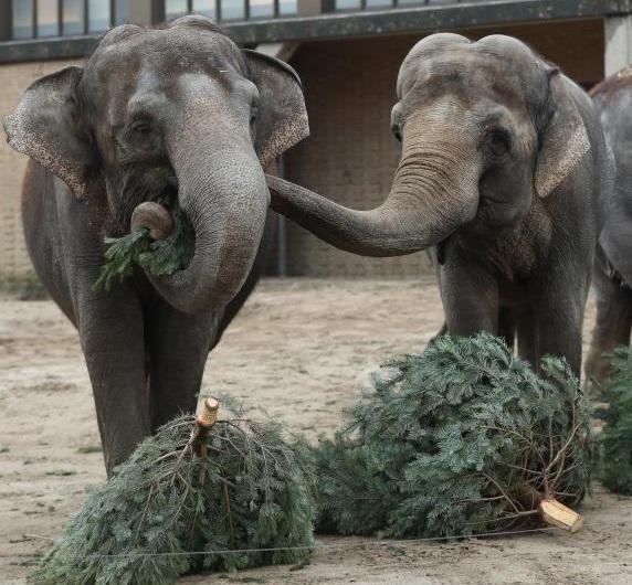 Ёлки-палки для зоопарка
