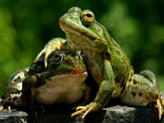 Как житель Рыбинска хотел разбогатеть на лягушках