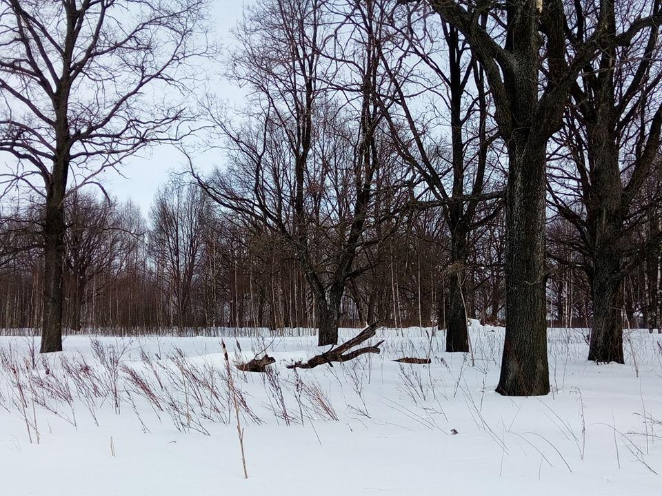 В Михайловском из-за сброса канализационных вод гибнет дубовая роща