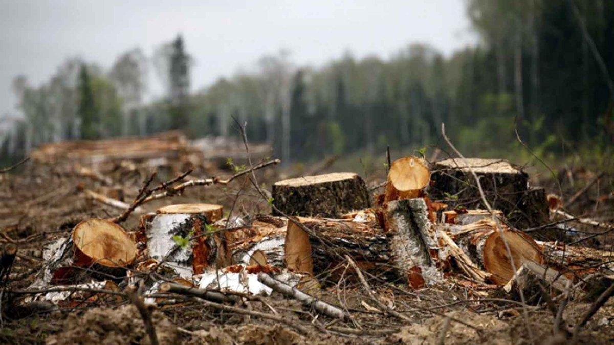 Развал лесного хозяйства