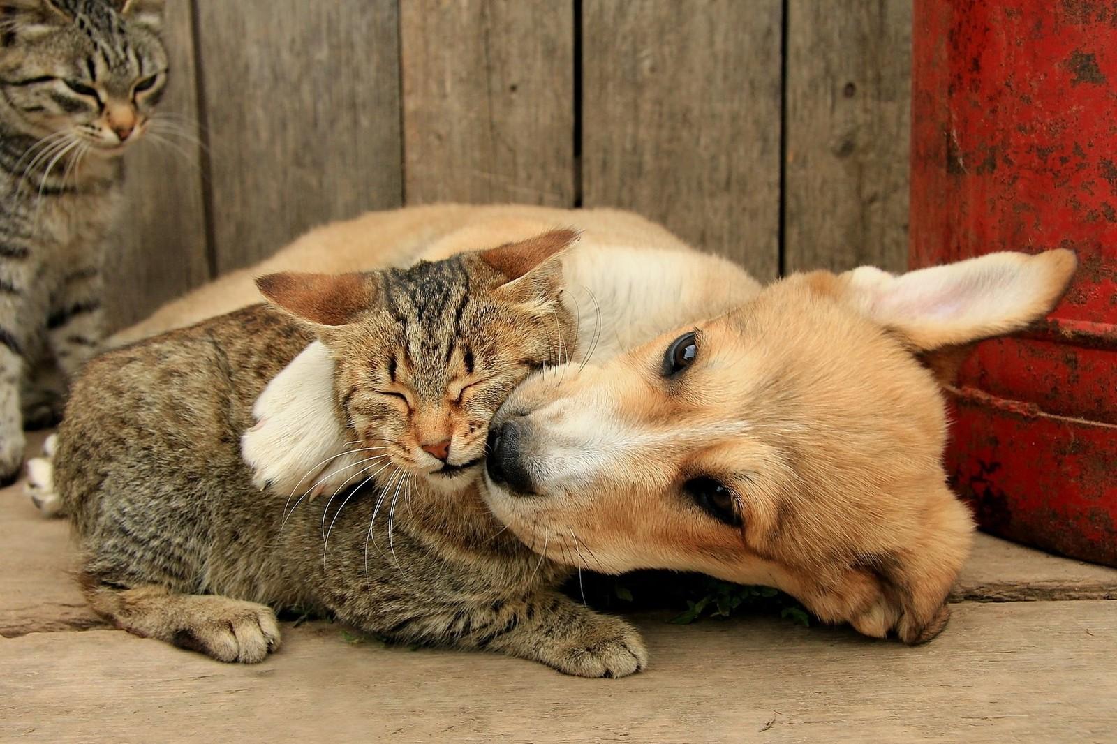 Собак и кошек хотят поставить на учет, или еще один побор