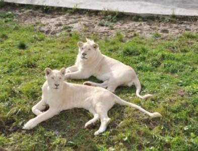 Звери в зоопарке – невольники без вины