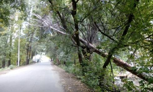 Когда деревья стали большими