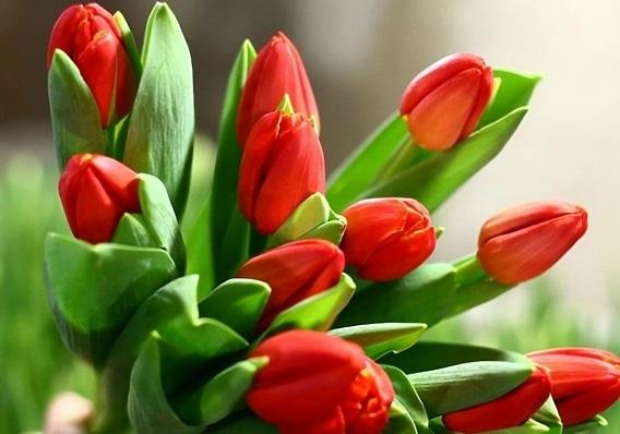 Пусть улыбнется весна!