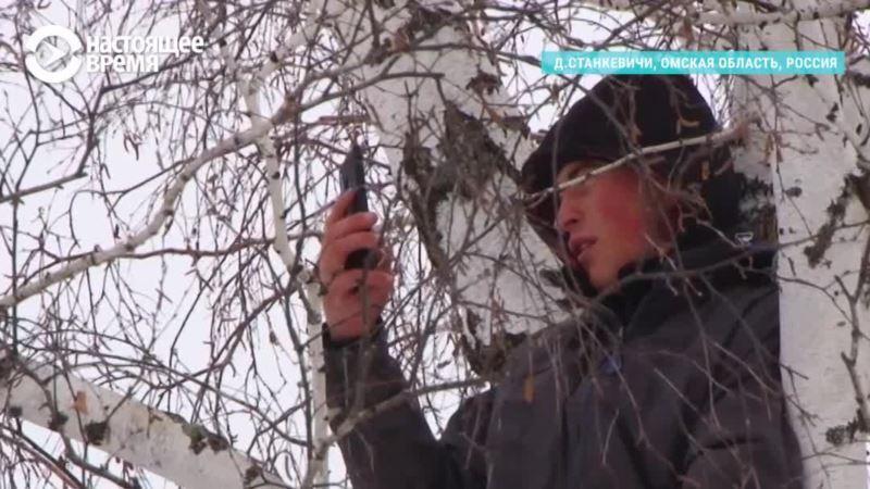 За знаниями — на дерево?
