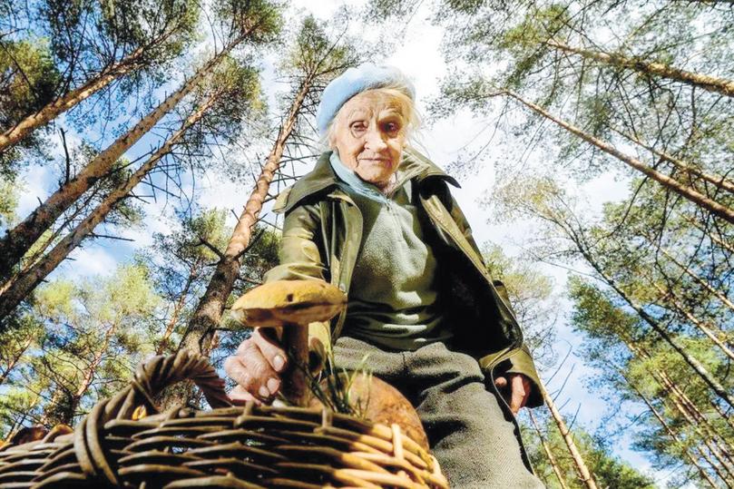 В России ужесточили правила сбора даров природы