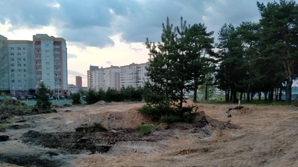 РУБКА СОСЕН в п. Красный Бор Ярославского района, по всей видимости, продолжится!