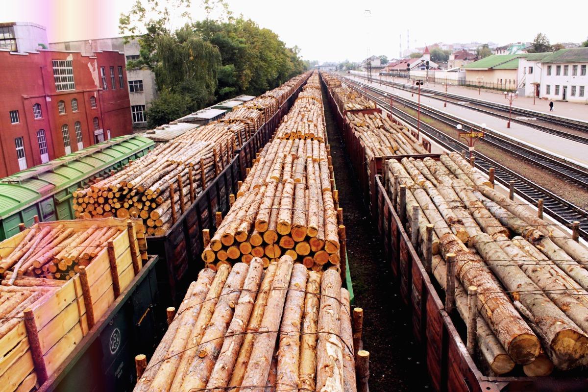 Ускоренными темпами из страны вывозят лес