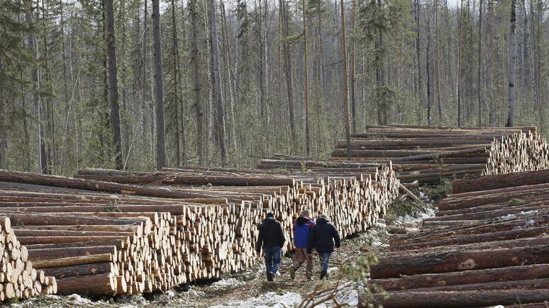 Минприроды поражает: Решается отдать русский лес в аренду на 99 лет
